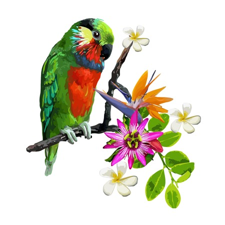 parakeet: exotic birds parrot and beautiful flowers
