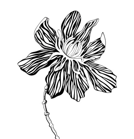zebra print: decorative graphic flowers on a white background