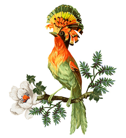 Bird of Paradise and exotic flowers on a white background