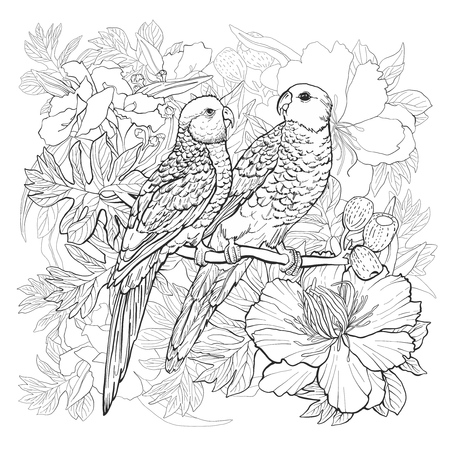parakeet: Linear drawing of two parrots and exotic flowers for coloring book Illustration