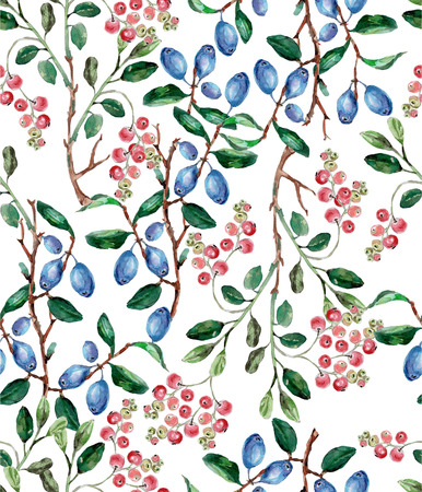 cranberries: Drawing watercolor. berry cranberries and blueberries on a white background. Stock Photo