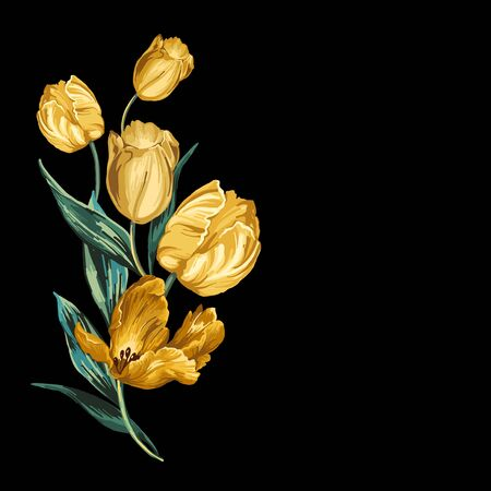 Isolated yellow tulips on a black background.