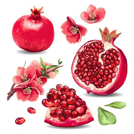 Frutta Melograno e fiori rosa. Elemento isolato.