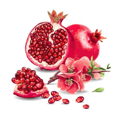 과일 석류와 흰색 배경에 핑크 꽃입니다. 고립 된 요소입니다.