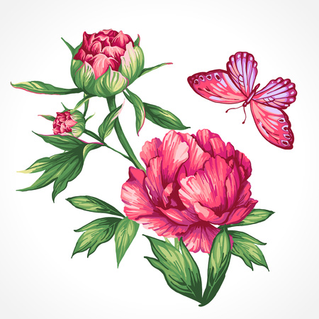 Isolated drawing of large peonies and butterflies Ilustracja