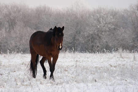 horse standing on a field in winter photo