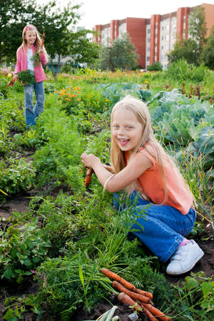 Two young girls working in vegetable garden photo