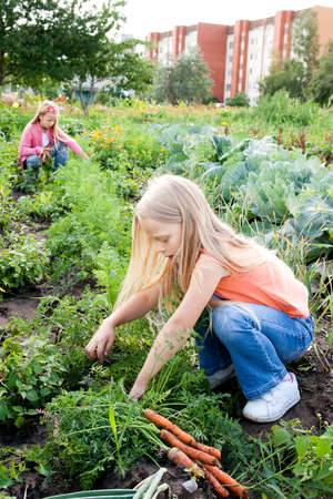 Two young girls working in vegetable garden Stockfoto