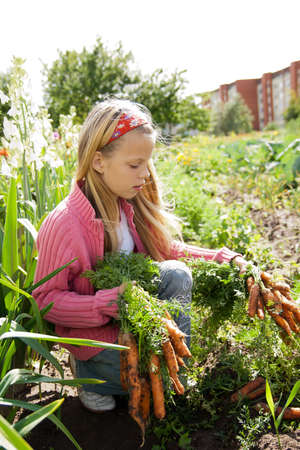 young girls working in vegetable garden, hold fresh carrots Stockfoto