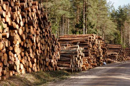 freshly cut logs stack at rural roadside Stock Photo - 13515690