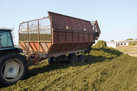 making silage stocks for animal feeding in winter. Stock Photo - 15615805