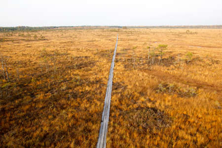 Bog in sunny autumn day.  Vasenieku Purvs is a swamp in Ventspils Rajons, Latvia, Europa photo