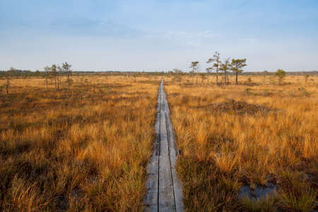 Bog in sunny autumn day.  Vasenieku Purvs is a swamp in Latvia, Europa Stock Photo - 16379180