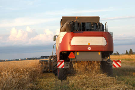 mows: The combine mows wheat in a field in summer evening