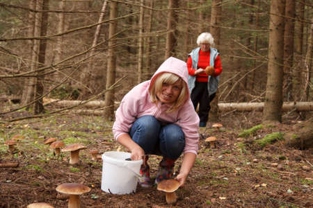 mushrooming: Two women gone mushrooming in the forest