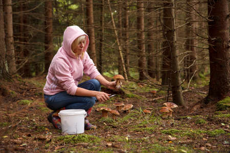 fungoid: A woman picking up mushrooms in the forest Stock Photo