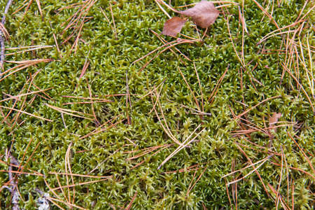 pineal: green mossy soil with pine needles and leaves