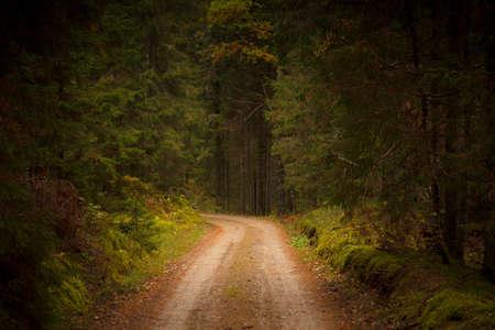 Een onverharde weg die door een dicht bos gaat