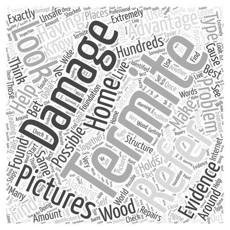 Pictures of Termite Damage word cloud concept