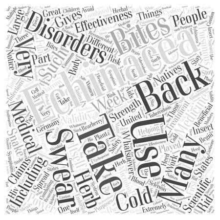 yarrow: Echinacea word cloud concept