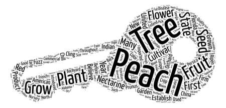 History Of Peach Trees Prunus Persica text design wordcloud concept