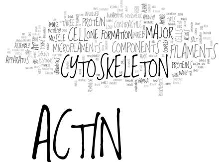 muscle formation: ACTIN ANTIBODY AVAILABLE IN IMGENEX NOW TEXT WORD CLOUD CONCEPT