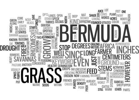BERMUDA GRASS TEXT WORD CLOUD CONCEPT