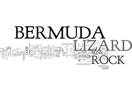 BERMUDA ROCK LIZARD TEXT WORD CLOUD CONCEPT