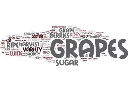 ARE MY GRAPES READY TO HARVEST Text Background Word Cloud Concept