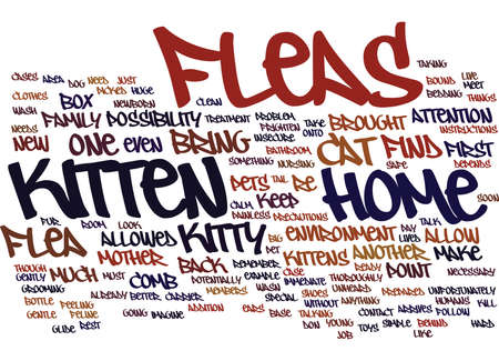 FLEAS AND YOUR KITTEN Text Background Word Cloud Concept