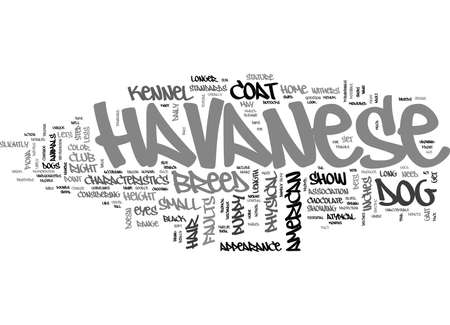 gait: IS THE HAVANESE THE RIGHT PUPPY FOR YOU Text Background Word Cloud Concept