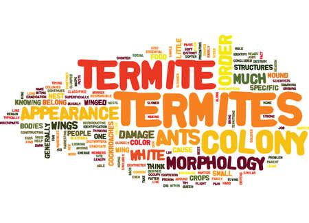 TERMITE APPEARANCE AND MORPHOLOGY Text Background Word Cloud Concept