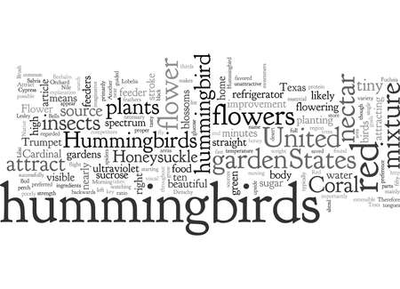 About Hummingbirds and How to Attract Them to Your Garden