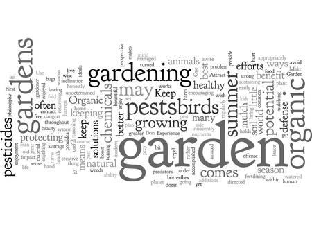 An Organic Summer Garden Experience