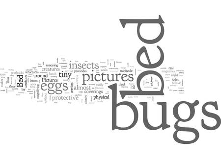 bed bugs pictures 向量圖像