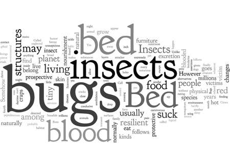 bed bugs insect
