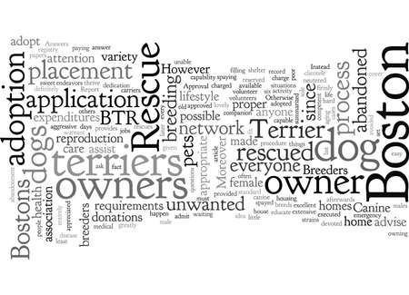 boston dog rescue terrier