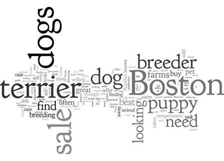 boston dog sale terrier