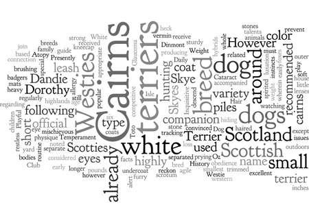 cairn dog terrier