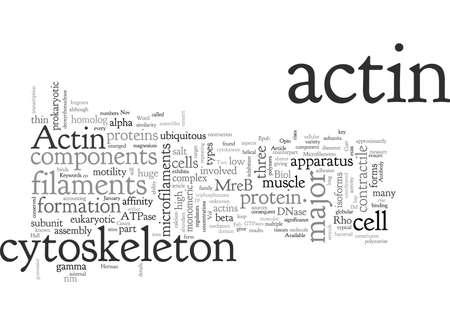 Actin Antibody Available in Imgenex now Ilustração