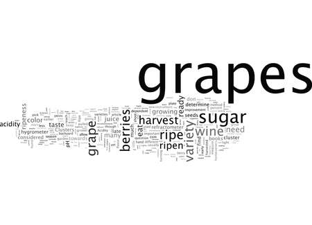Grapes, typography text art vector illustration