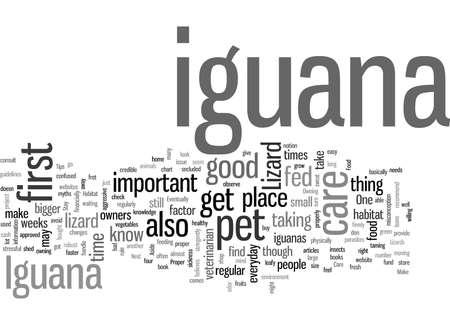 iguana lizard Illustration