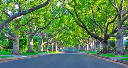 A shot of quiet green road
