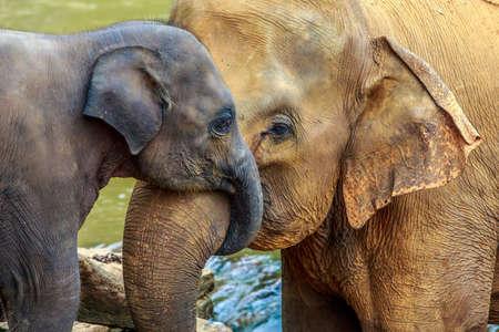 river trunk: cuddling elephant and baby elephant