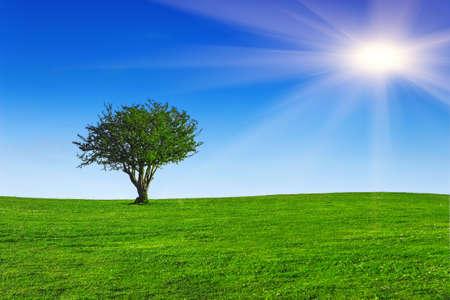 Green field with lone tree Zdjęcie Seryjne