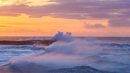 Surf on  west Iceland coast with heavy waves and strong wind at rose sunrise  background. photo