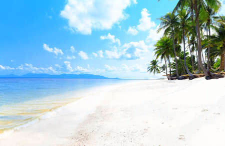 white sand beach: Tropical beach with coconut palm trees and white sand
