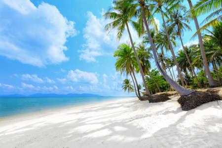 arena blanca: Playa tropical con palmeras de coco y arena blanca