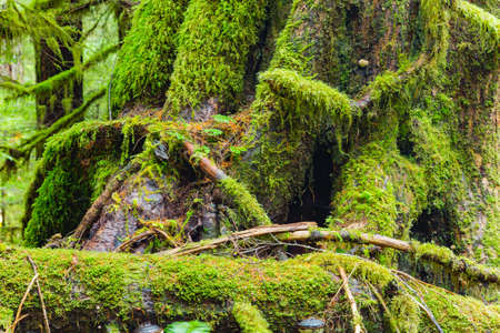 sol duc: Sol Duc rainforest at Olympic National Park, Oregon Coast Stock Photo