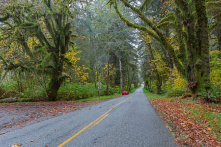 mosses: Scenic road at Hoh Rainforest, Olympic National Park, Washington
